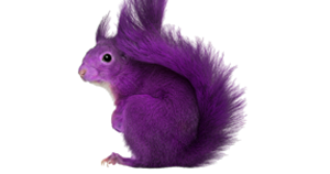 Sales Hiring = Purple Squirrel